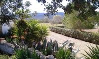 Border and garden