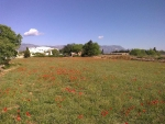 Poppy field and house