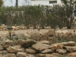 Robin on flower bed rocks