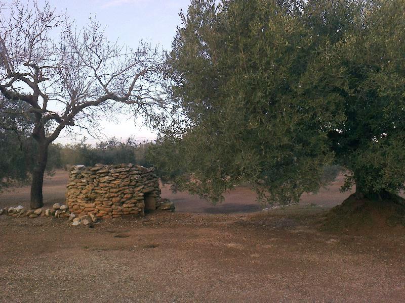 Olive grove bird hide