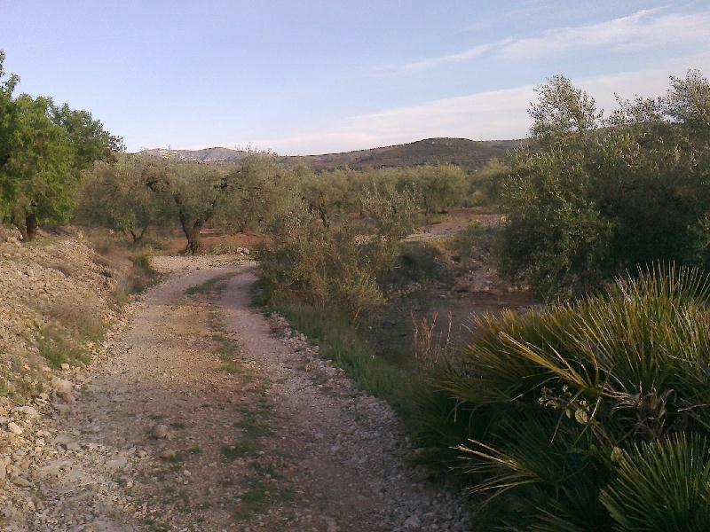 Track between olives