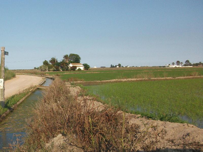 Delta rice fields