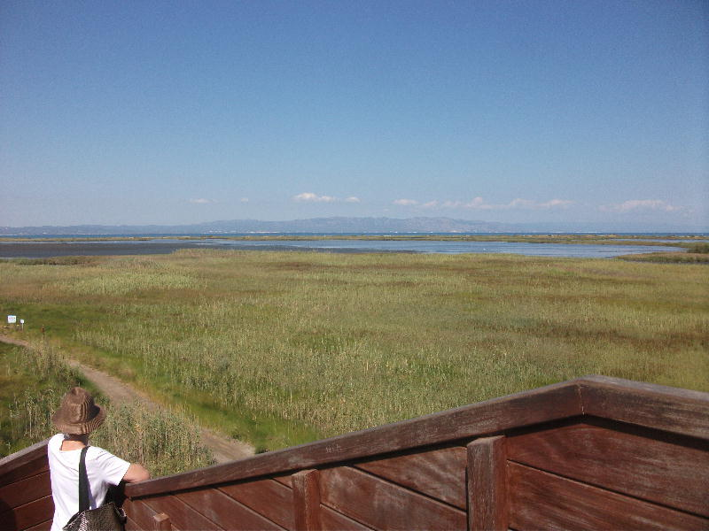 Delta birdwatching