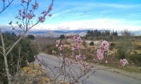 Blossom and mountains